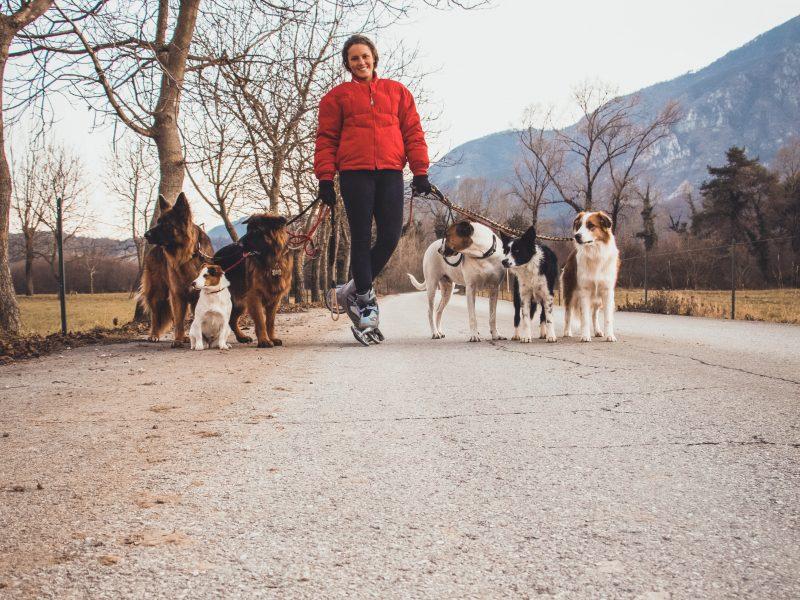 Daniela Pitardi Etologa Canina